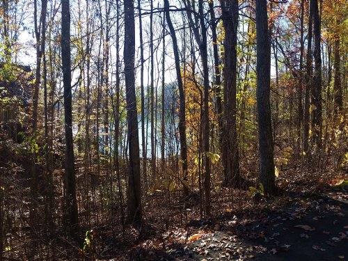 Cherokee Main Channel Lakefront Lot : Mooresburg : Hawkins County : Tennessee
