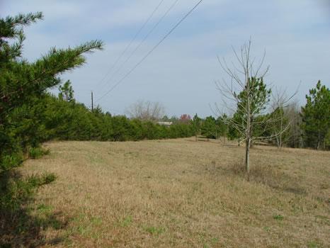 2.44 Acres : Swainsboro : Emanuel County : Georgia