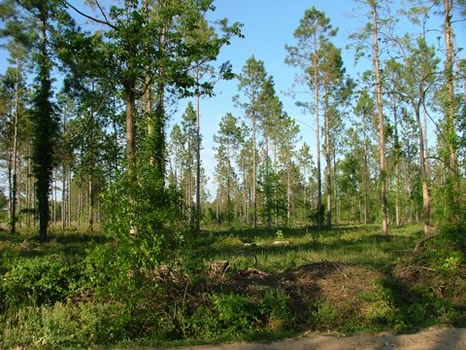 13.6 Acres : Metter : Candler County : Georgia