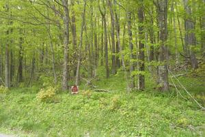 2.00 Acres  : Snowshoe : Pocahontas County : West Virginia