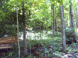 3.70 Acres  : Hillsboro : Pocahontas County : West Virginia