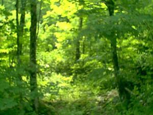 3.44 Acres  : Point Mountain : Randolph County : West Virginia