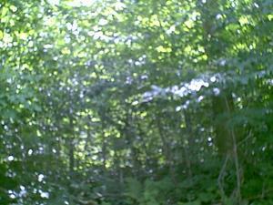 3.26 Acres  : Point Mountain : Randolph County : West Virginia