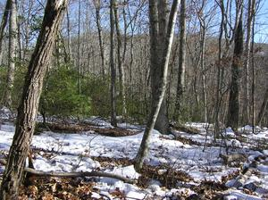 3.20 Acres  : Marlinton : Pocahontas County : West Virginia