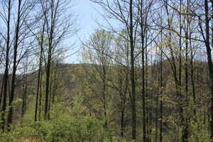 4.05 Acres  : Slatyfork : Pocahontas County : West Virginia