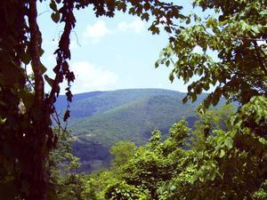 4.40 Acres  : Hillsboro : Pocahontas County : West Virginia
