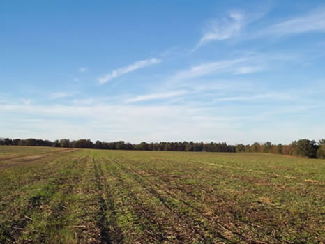19.38 Acres : Sandersville : Washington County : Georgia