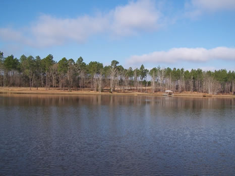 3.02 Acre Lot | Highland Lakes : Eastman : Dodge County : Georgia