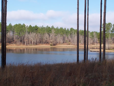 6.99 Acre Lot | Highland Lakes : Eastman : Dodge County : Georgia