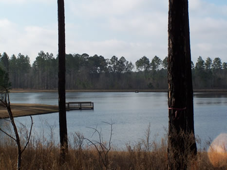 5.02 Acre Lot | Highland Lakes : Eastman : Dodge County : Georgia